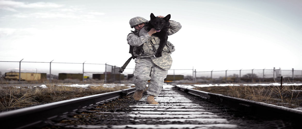 military pet relocation,pcs orders,pcs,military pet,pet shipping,pet relocation,pet transportation,military pet