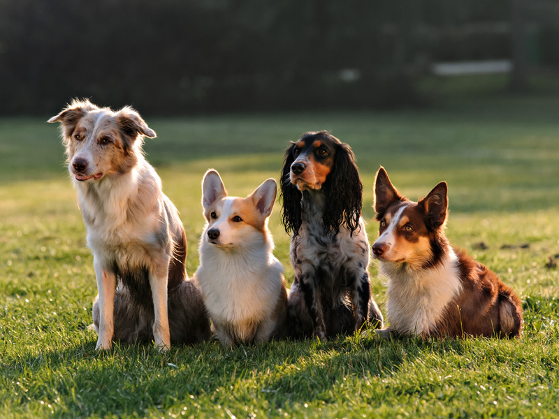 29 Mar How To Teach Your Dog Stay