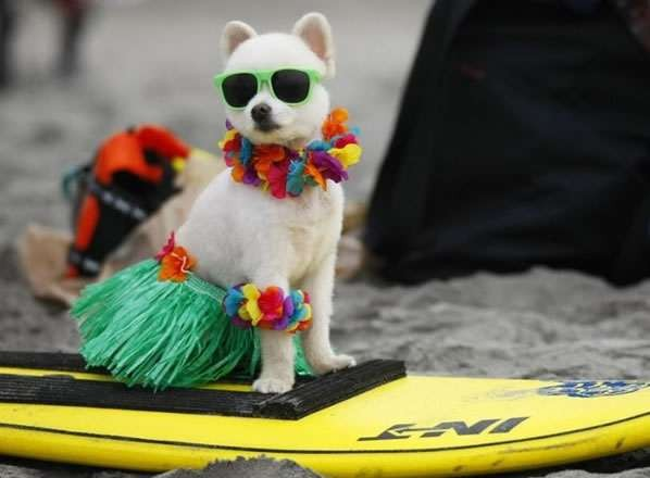Shipping Your Pet To Hawaii