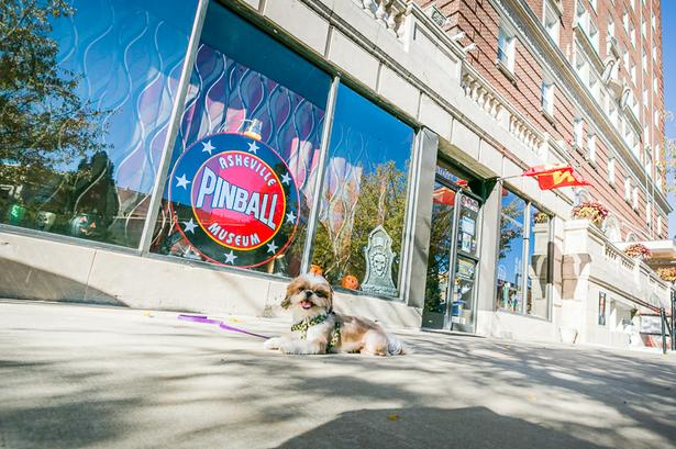 Dog Friendly Bookstore Asheville