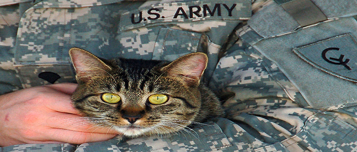 Pet relocation,pet shipping,pet transportation,military pets,psc pets,pcs orders,military relocation