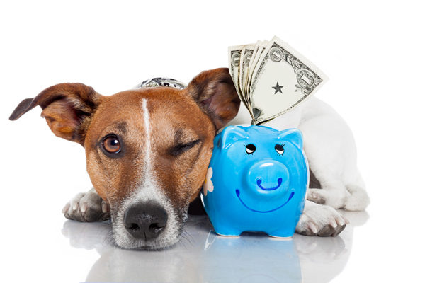 Pet Shipping Costs Continental Pet Relocation