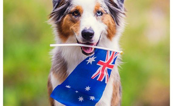 Continental Pet Relocation Professional Reliable Pet Services