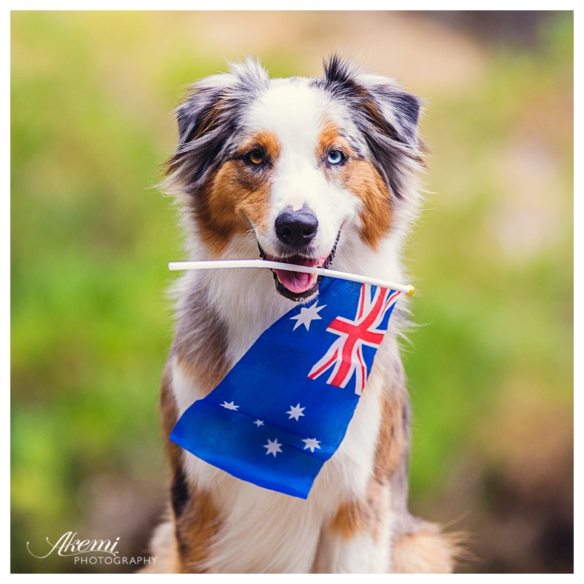 moving pets to australia - continental pet relocation